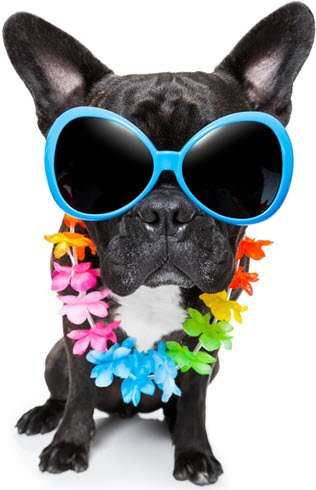 gafas para perros bulldog