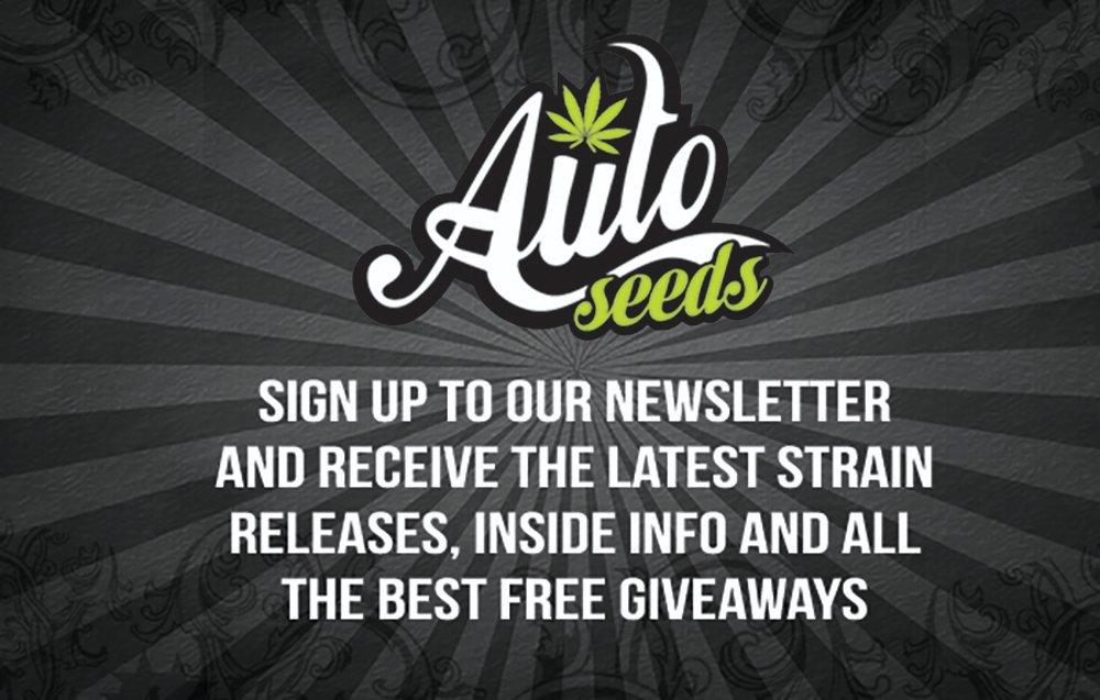 Gorilla Glue Auto | Gorilla glue Seeds | Autoseeds com